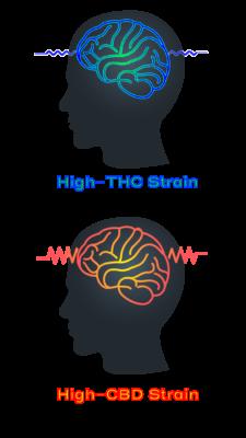 high-thc high-cbd strain epilepsy seizure