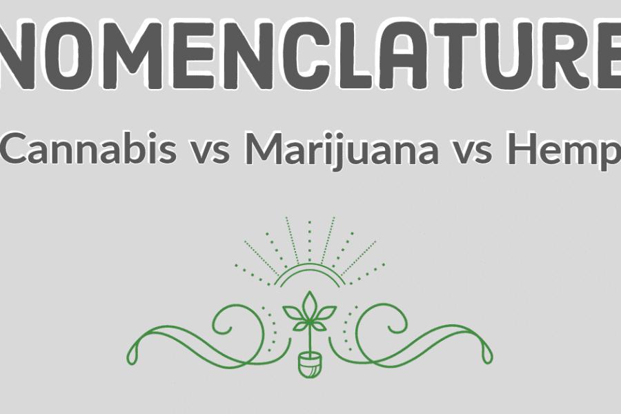 marijuana vs cannabis vs hemp