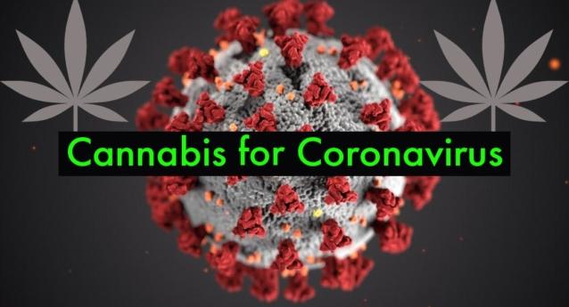 Cannabis for Coronavirus